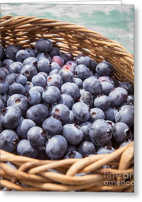 Orchard Greeting Cards - Basket of fresh picked blueberries Greeting Card by Edward Fielding