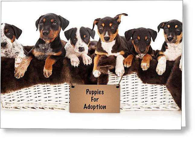 Obedient Greeting Cards - Basket of Mixed Breed Puppies Greeting Card by Susan  Schmitz