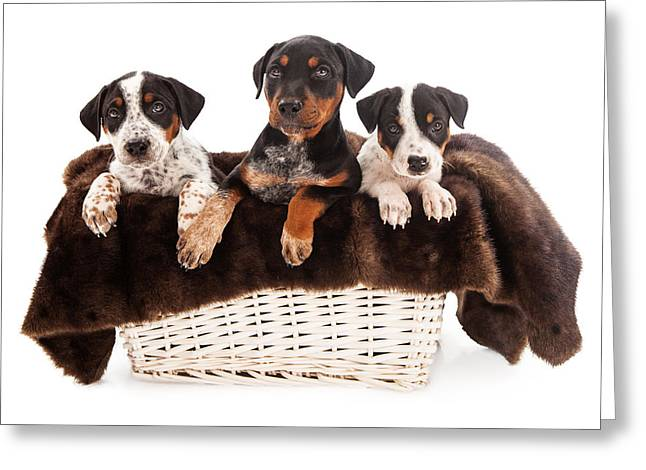 Guard Dog Greeting Cards - Basket of Rottweiler Mixed Breed Puppies Greeting Card by Susan  Schmitz