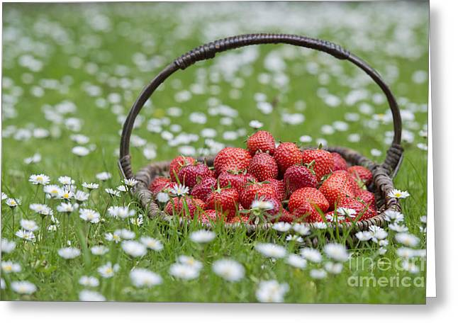 Fresh Picked Fruit Greeting Cards - Basket of Strawberries Greeting Card by Tim Gainey