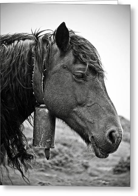 Wild Horses Greeting Cards - Basque Horse Greeting Card by RicardMN Photography