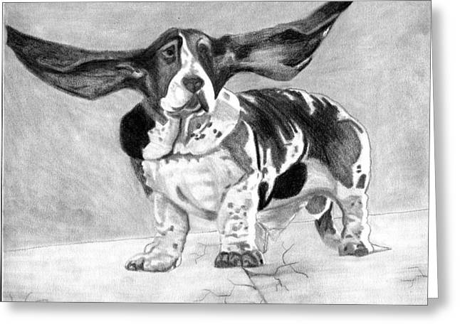 Basset Drawings Greeting Cards - Basset Artesien Normand Dog Portrait Greeting Card by Olde Time  Mercantile