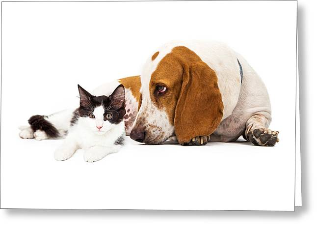 Domestic Animal Greeting Cards - Basset Hound Dog And Kitten Greeting Card by Susan  Schmitz