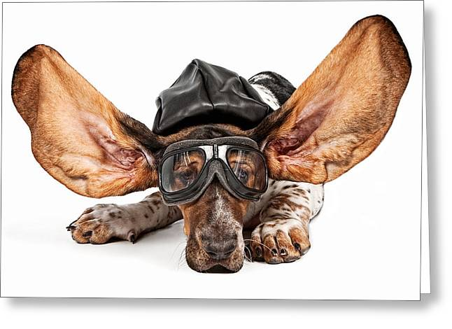 Sad Eyes Greeting Cards - Basset Hound Dog Aviator Greeting Card by Susan Schmitz
