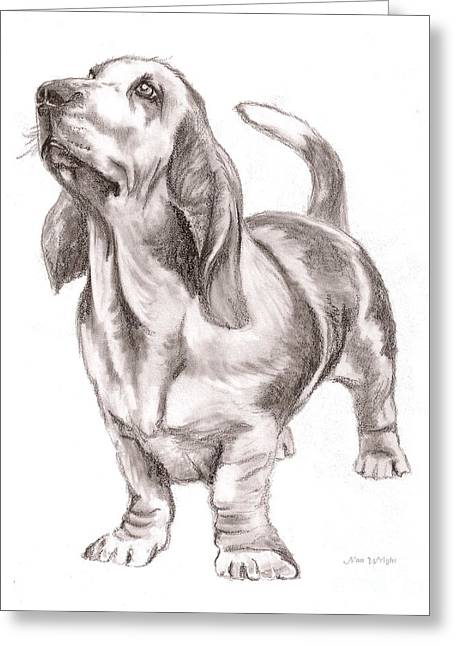 Basset Drawings Greeting Cards - Basset Hound Dog Greeting Card by Nan Wright