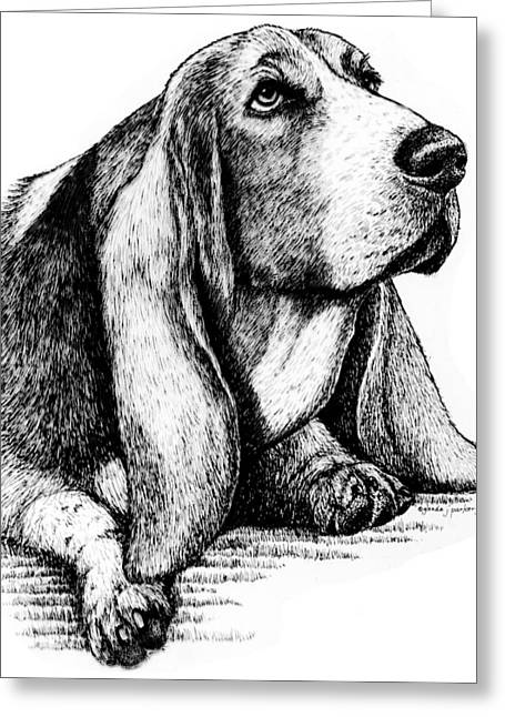 Basset Drawings Greeting Cards - Basset Hound Greeting Card by Glenda Denny