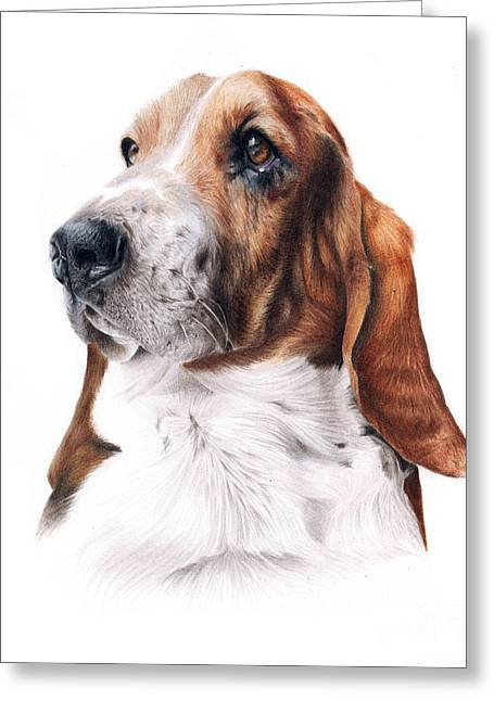 Basset Drawings Greeting Cards - Basset Hound Greeting Card by Jessica  Lennox