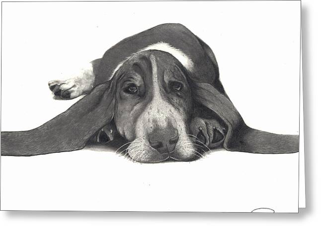Basset Drawings Greeting Cards - Basset Hound Greeting Card by Matt Pascucci