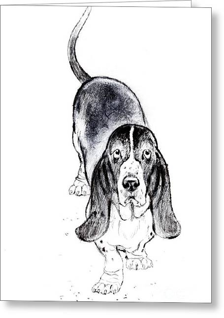 Basset Drawings Greeting Cards - Basset Hound portrait Greeting Card by Kurt Tessmann