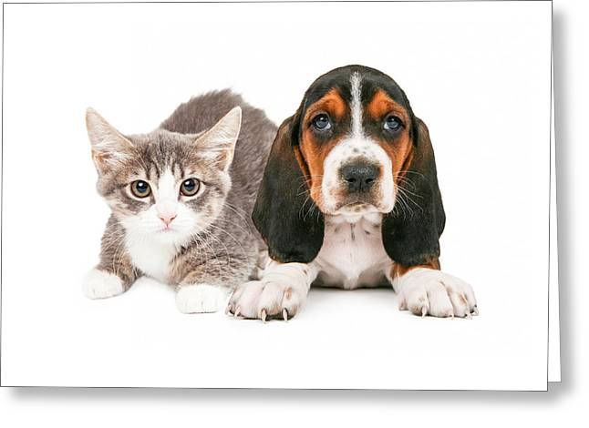 Full-length Portrait Photographs Greeting Cards - Basset Hound Puppy and Kitten Greeting Card by Susan  Schmitz