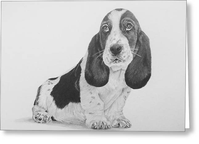 Basset Drawings Greeting Cards - Basset Hound Greeting Card by Sandra Weiner