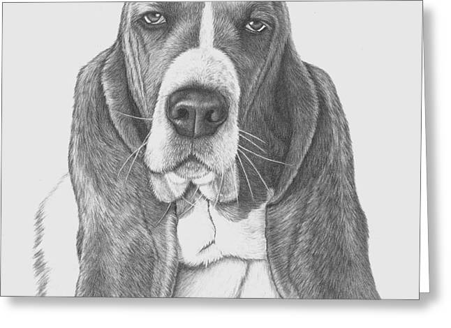 Basset Drawings Greeting Cards - Basset Hound study Greeting Card by Anik