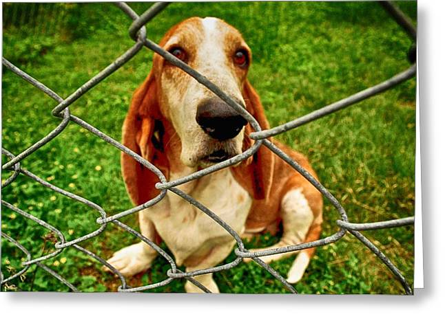 Basset Hound Greeting Cards Greeting Cards - Basset Sweetness Greeting Card by Kristina Deane