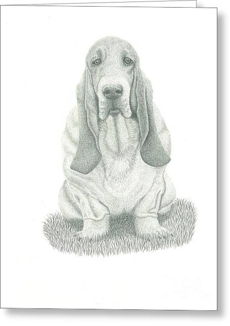 Basset Drawings Greeting Cards - Bassett Greeting Card by Ronald Scott