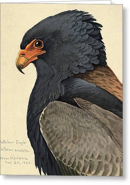 1874 Greeting Cards - Bateleur Eagle Greeting Card by Louis Agassiz Fuertes