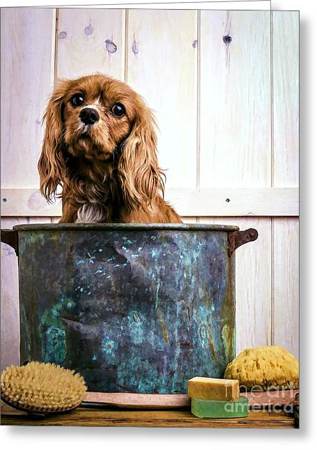 Puppies Greeting Cards - Bath Time - King Charles Spaniel Greeting Card by Edward Fielding