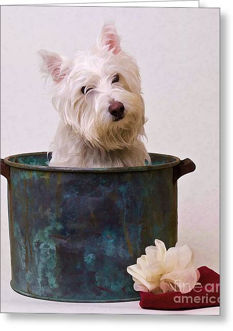 Funny Dog Digital Greeting Cards - Bath Time Westie Greeting Card by Edward Fielding