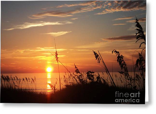 St. Lucie County Greeting Cards - Bathe in Light Greeting Card by Megan Dirsa-DuBois