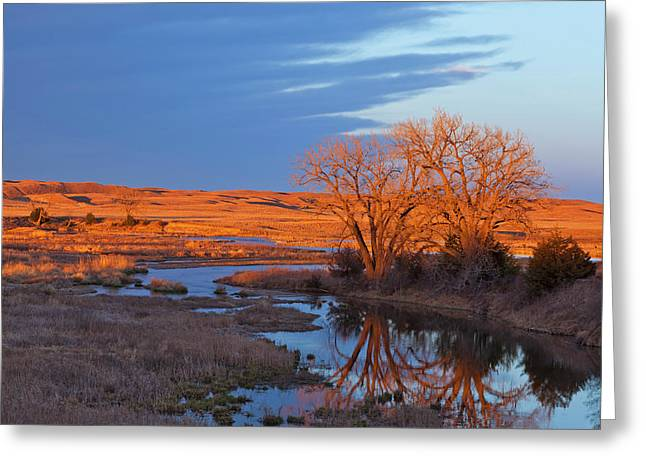 Bathed In Sunset Light The Calamus Greeting Card by Chuck Haney