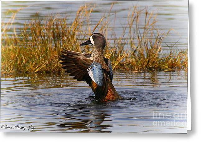 Bathing Blue-winged Teal Greeting Card by Barbara Bowen
