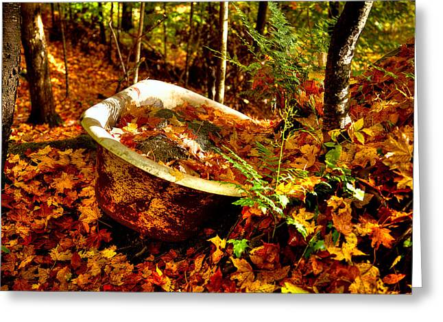 David Patterson Greeting Cards - Bathing in Autumn Color Greeting Card by David Patterson
