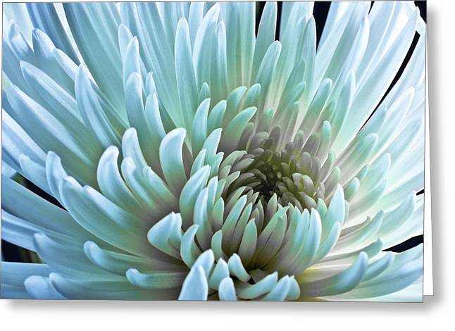 Flora Photo Greeting Cards - Bathing in Blue Greeting Card by Jon Glaser