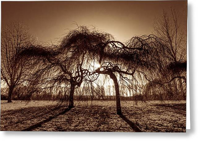 Tree Art Greeting Cards - Bathing in Sunlight Greeting Card by Wim Lanclus