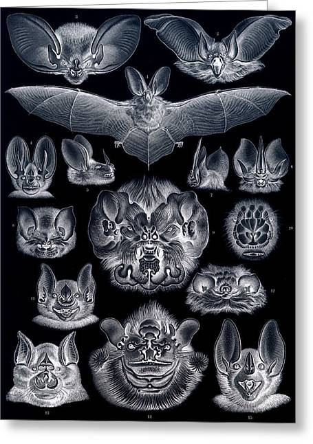 Bat Digital Greeting Cards - Bats Bats and More Bats Inverted Greeting Card by Unknown