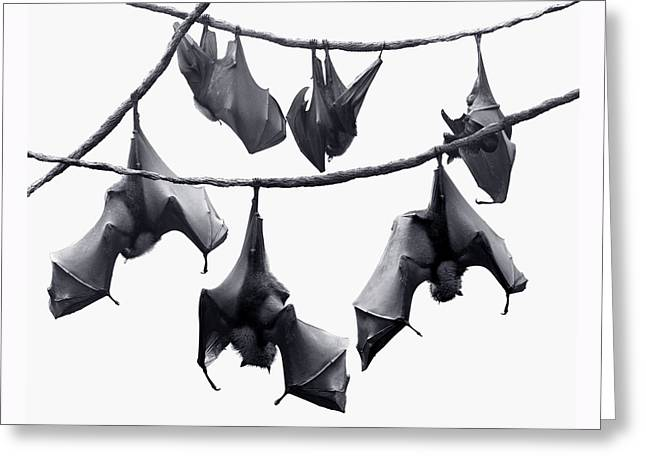 Frightful Greeting Cards - Bats Hangin Out Greeting Card by Edwin Verin