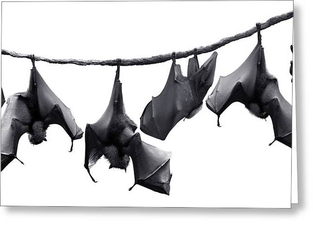 Frightful Greeting Cards - Bats Hangin Out II Greeting Card by Edwin Verin