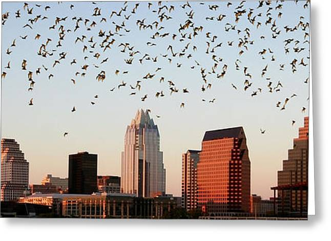 Austin. Bats Greeting Cards - Bats Over Austin Panoramic Greeting Card by Randy Smith