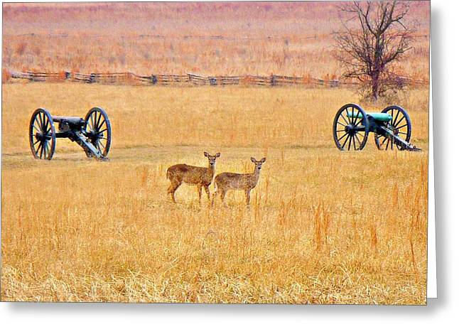 Pea Ridge Greeting Cards - Battlefield Deer Greeting Card by Brittany Roth