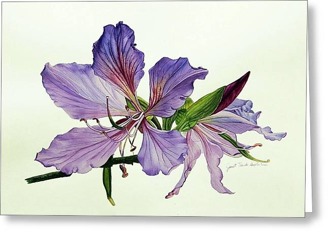 Bauhinia Botanical Painting Greeting Card by Janet Pancho Gupta
