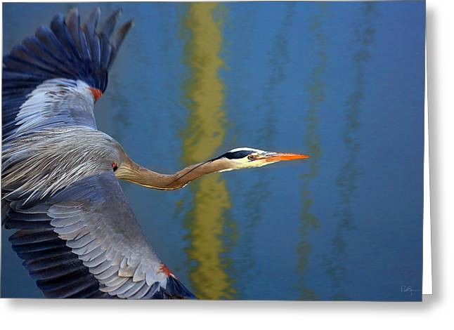 Bird In Flight Greeting Cards - Bay Blue Heron Flight Greeting Card by Robert Bynum