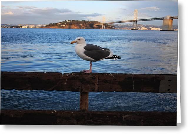 Famous Bridge Greeting Cards - Bay Bridge Seagull Greeting Card by Aidan Moran