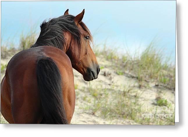 Shadow Horse Studios Greeting Cards - Bay Corolla Stallion Greeting Card by Lyndsey Warren