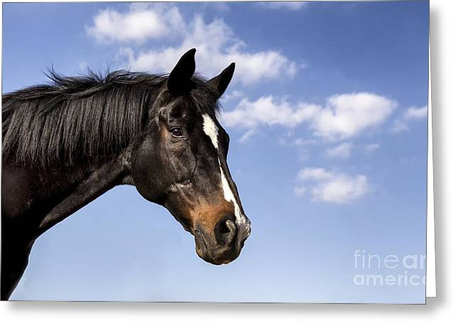 Quarter Horses Greeting Cards - Bay on Blue Greeting Card by Holly Martin