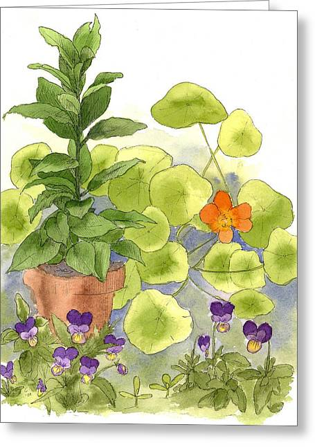 Johnny Jump Up Pansy Greeting Cards - Bay Tree Nasturtiums Greeting Card by Cathie Richardson