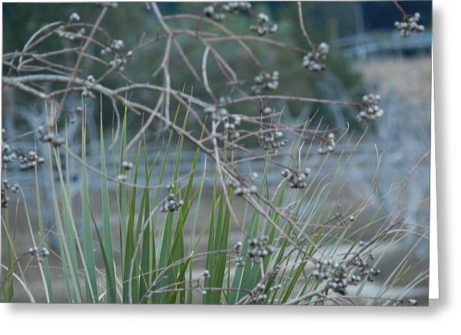 Bayonet Greeting Cards - Bayberries and Marsh Grass Greeting Card by Terry Cobb