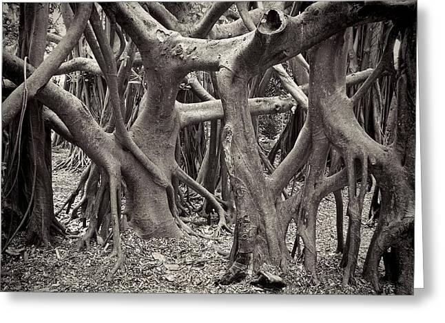Baynan Roots Greeting Card by Rudy Umans