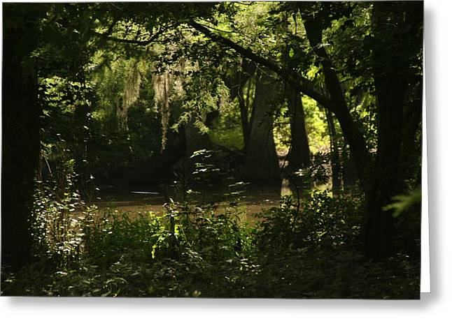 John Glass Greeting Cards - Bayou Creepers Greeting Card by John Glass