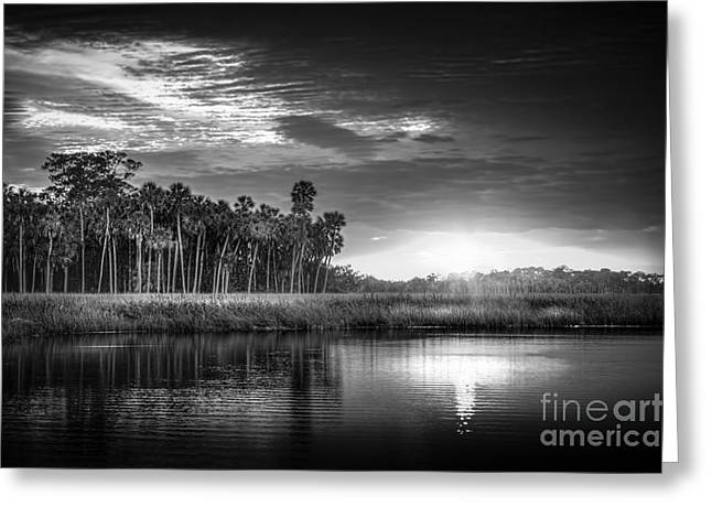 Oak Hammocks Greeting Cards - Bayou Sunset-b/w Greeting Card by Marvin Spates