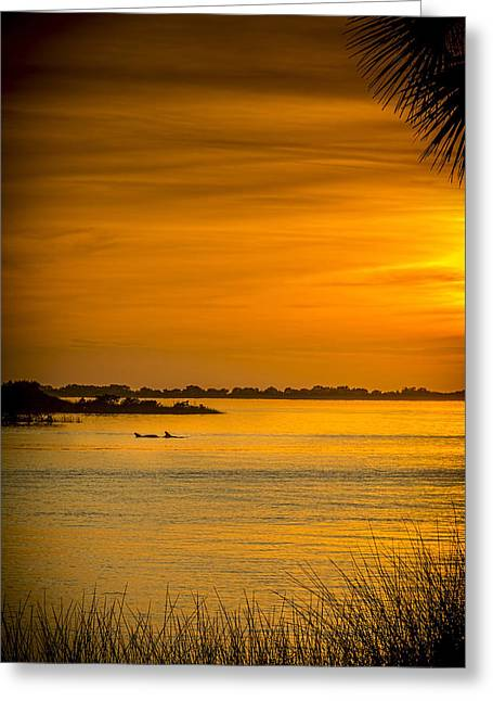 Sea View Greeting Cards - Bayport Dolphins Greeting Card by Marvin Spates