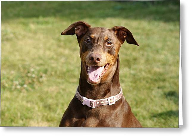 Doby Greeting Cards - Be Happy Greeting Card by Brian Nelson