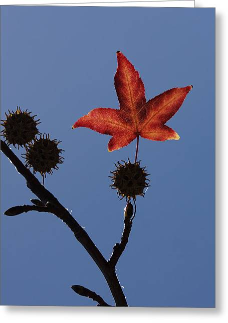 Tree. Sycamore Greeting Cards - Be Happy Greeting Card by Ernie Echols