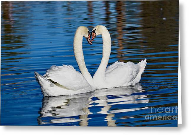 Wildlife Celebration Greeting Cards - Be Mine Greeting Card by Deb Halloran