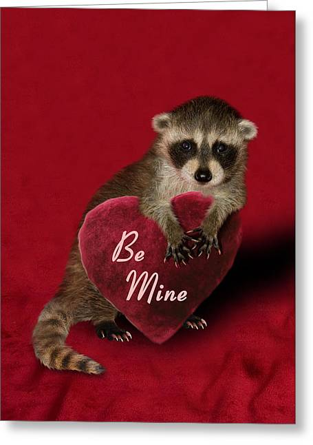 Animals Love Greeting Cards - Be Mine Raccoon Greeting Card by Jeanette K