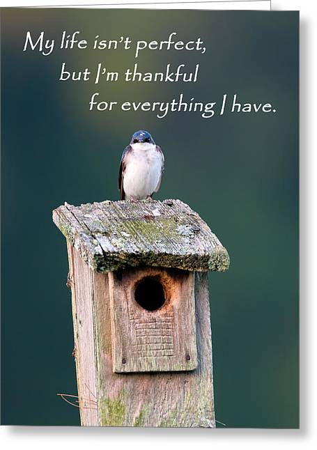 Swallow Greeting Cards - Be Thankful Greeting Card by Bill  Wakeley
