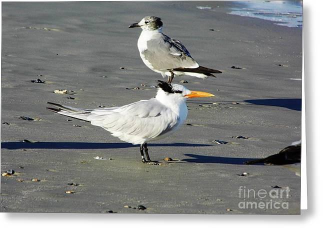 Best Seller Greeting Cards - Beach - Birds Greeting Card by D Hackett