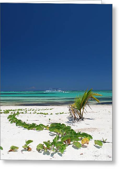 Playa Blanca Greeting Cards - Beach and Vegetation Playa Blanca Punta Cana Resort Greeting Card by Heather Kirk